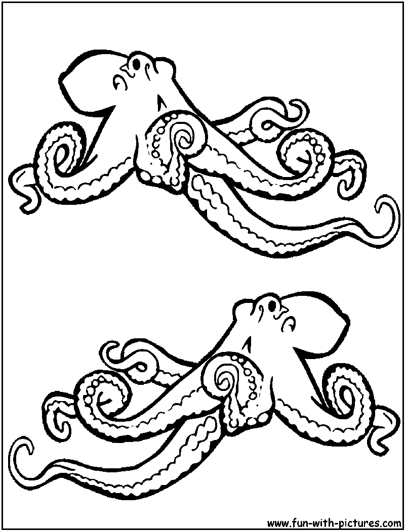 the octopus coloring pages clipart panda free clipart images