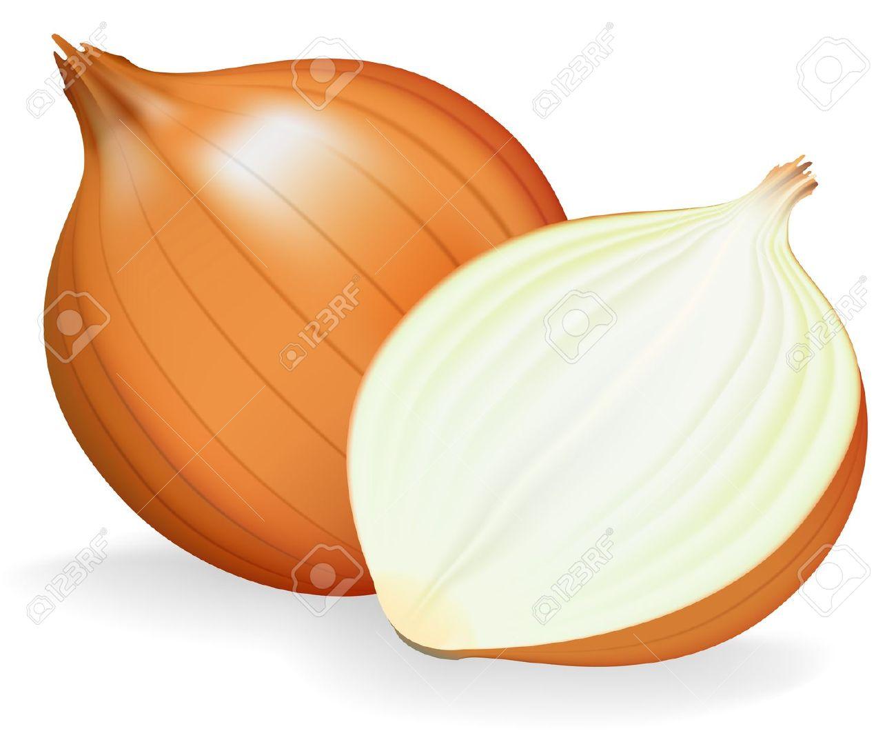 Onion Clip Art Images | Clipart Panda - Free Clipart Images