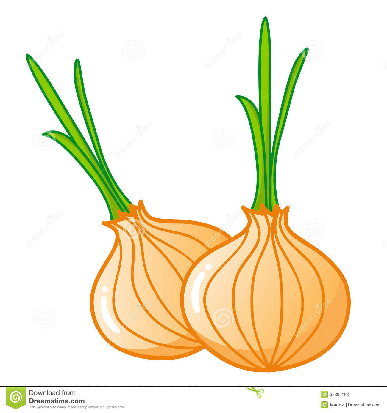 onion-clipart-onions-isolated-illustration-white-background-32309163    Onion Clipart