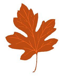 Orange Leaves C... Free Clip Art Maple Leaf