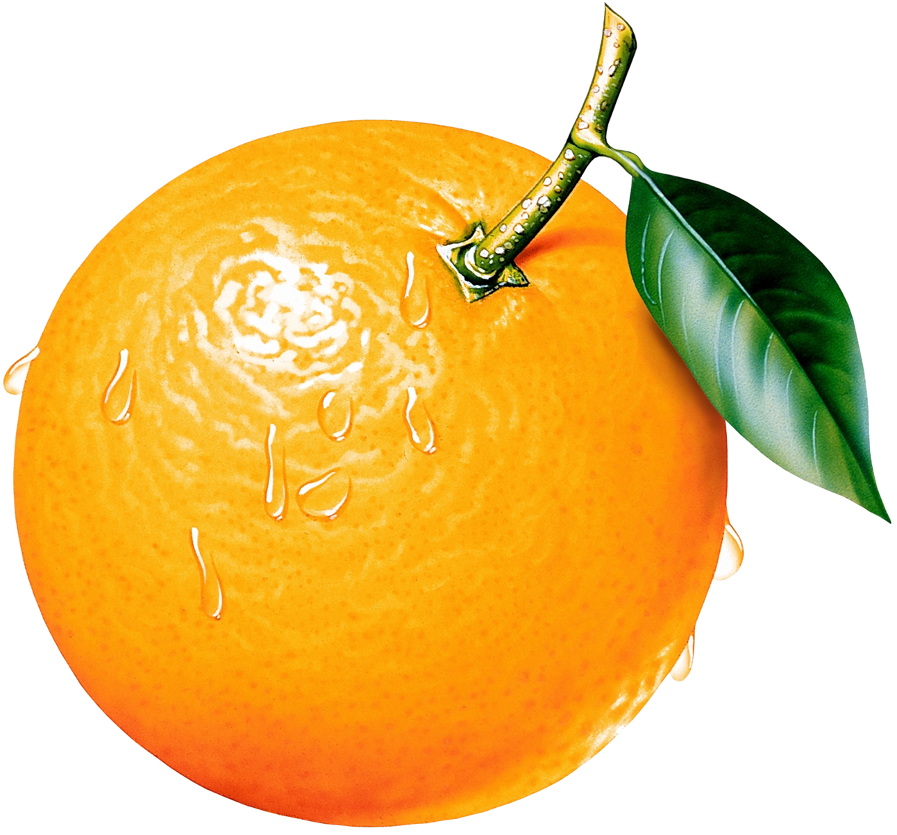 Orange Fruit Tree Clip Art | Clipart Panda - Free Clipart ...