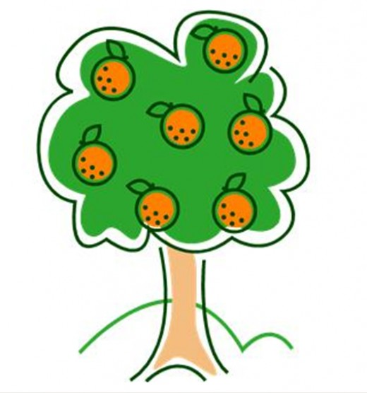 Image Gallery orange tree drawing