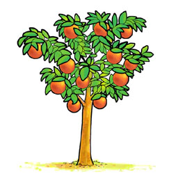 Related Keywords & Suggestions for orange tree drawing