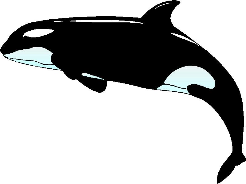 Orcas Clip Art   Clipart Panda - Free Clipart Images