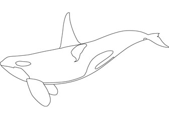 Orca Coloring Pages | Clipart Panda - Free Clipart Images