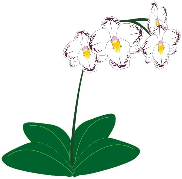 orchid clip art | Clipart Panda - Free Clipart Images