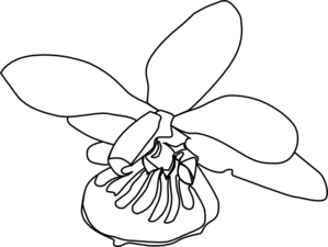 Orchid Flower Clipart | Clipart Panda - Free Clipart Images