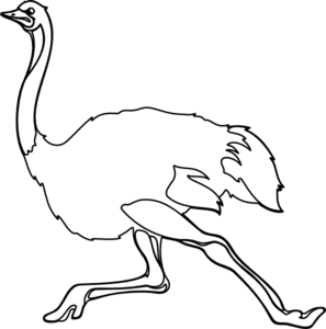 ostrich outline clip art clipart panda free clipart images rh clipartpanda com ostrich clipart picture ostrich clipart black and white