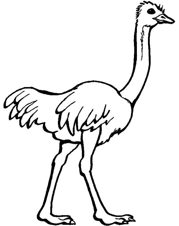 ostrich-coloring-page-Ostrich-Image-Coloring-Page.jpg