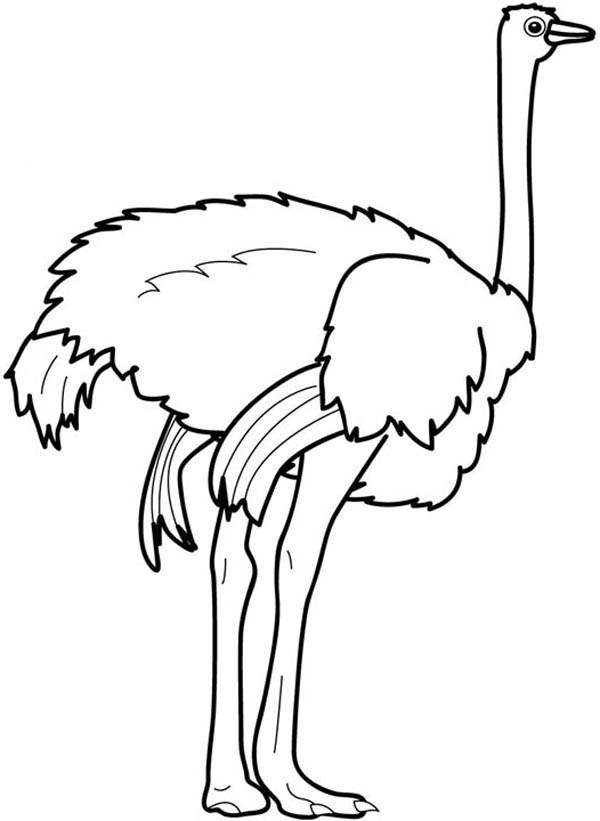 Ostrich Strong Feet Coloring