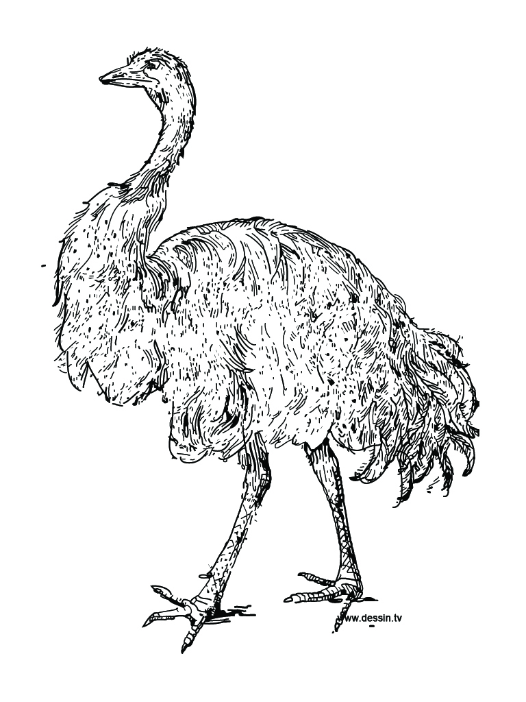 ostrich coloring page clipart panda free clipart images