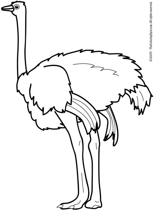 ostrich coloring pages 8 Clipart Panda Free Clipart Images