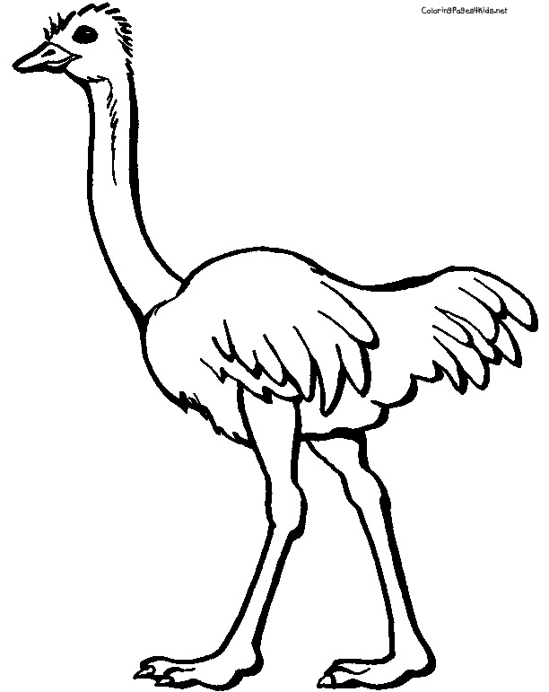 Ostrich Coloring Pages Clipart Panda Free Clipart Images