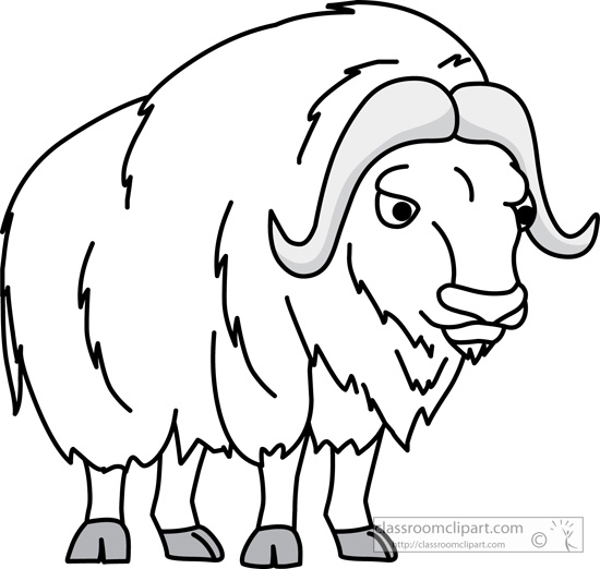 coloring pages of musk ox - photo#5
