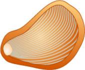 Oyster Clip ArtOyster Clip Art Free