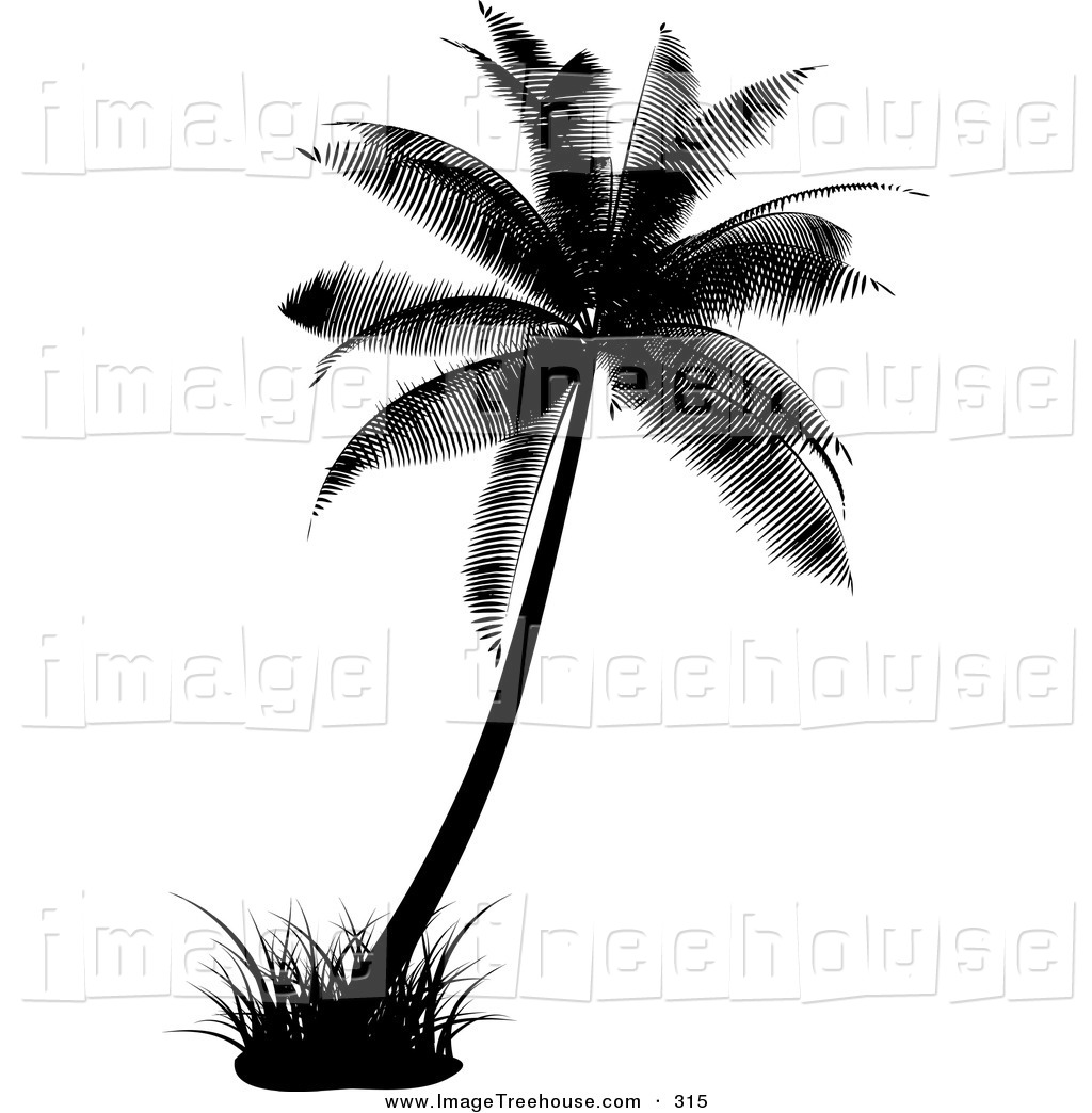 palm%20tree%20clipart%20black%20and%20white