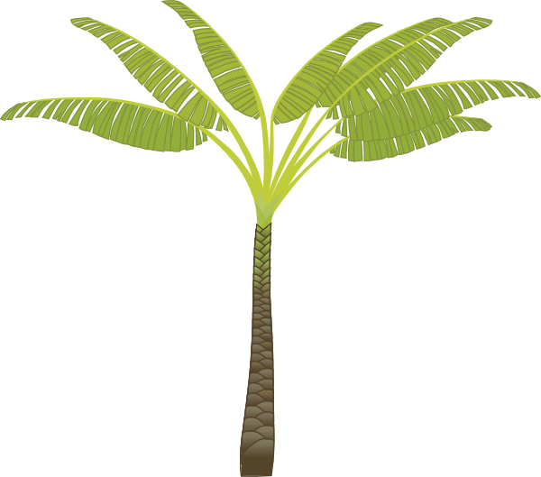 Animated Palm Tree With Coconuts Animated Palm Tree With