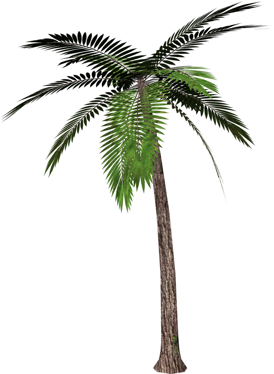 Palm Tree No Background | Clipart Panda - Free Clipart Images: www.clipartpanda.com/categories/palm-tree-no-background