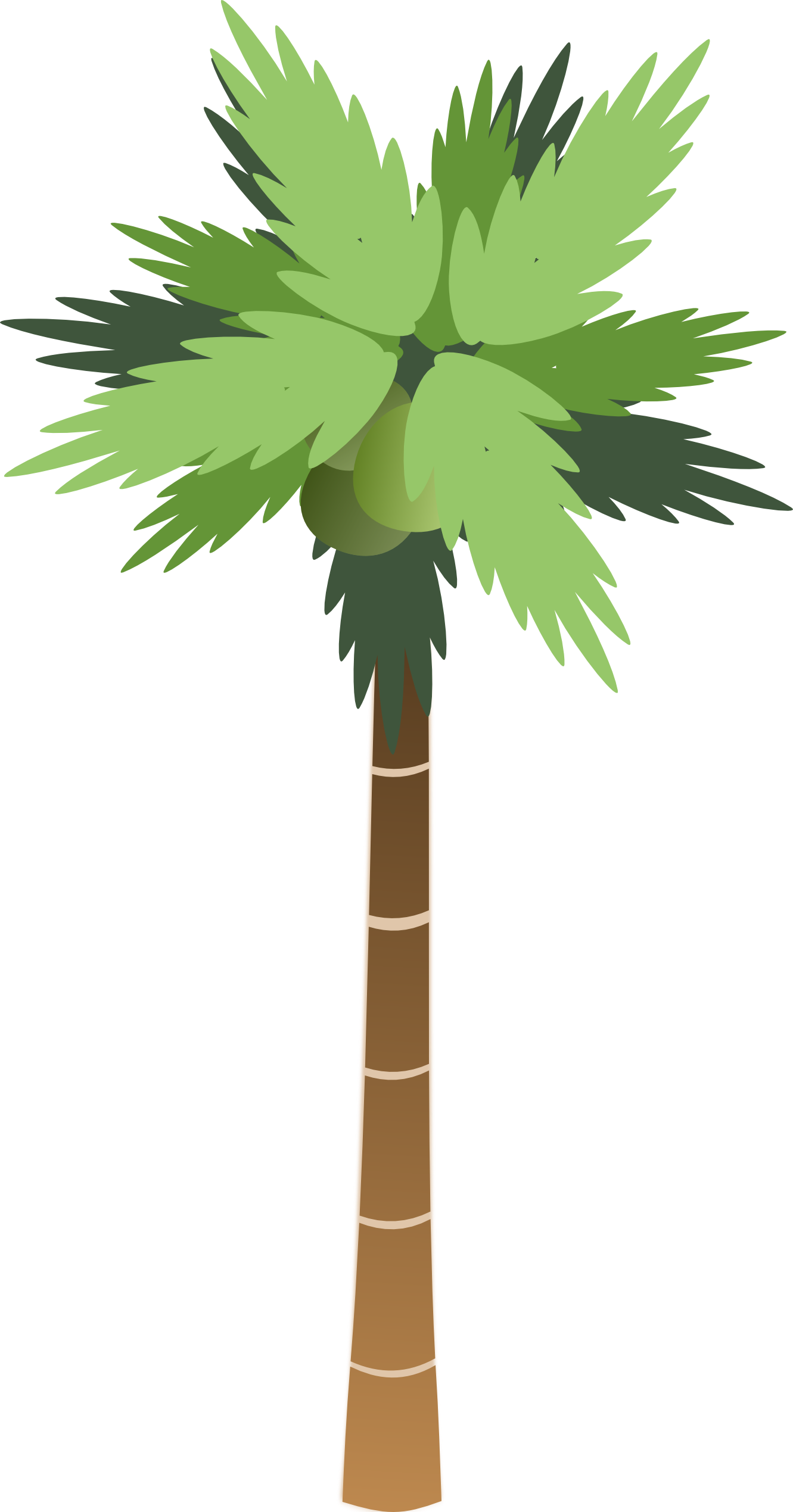 palm-tree-no-background-palm_tree_2-1331px.png