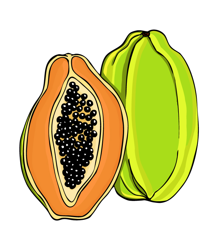papaya clipart - photo #4