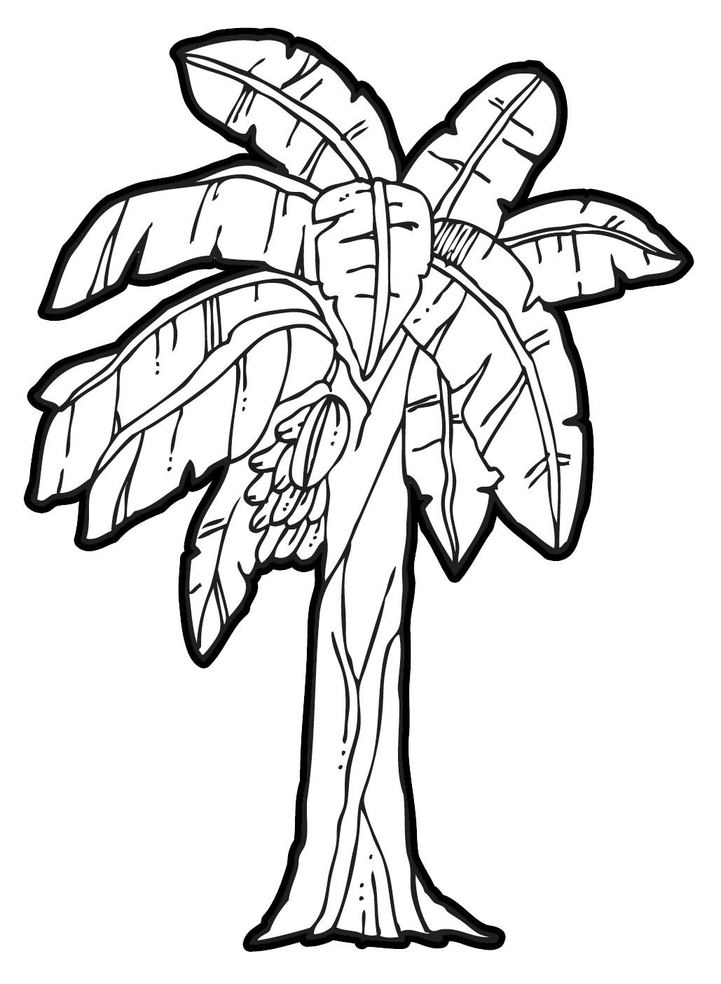 24 Banana Tree Drawing