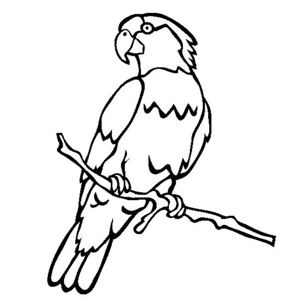 Macaw Bird Coloring Pages Macaw Coloring Page