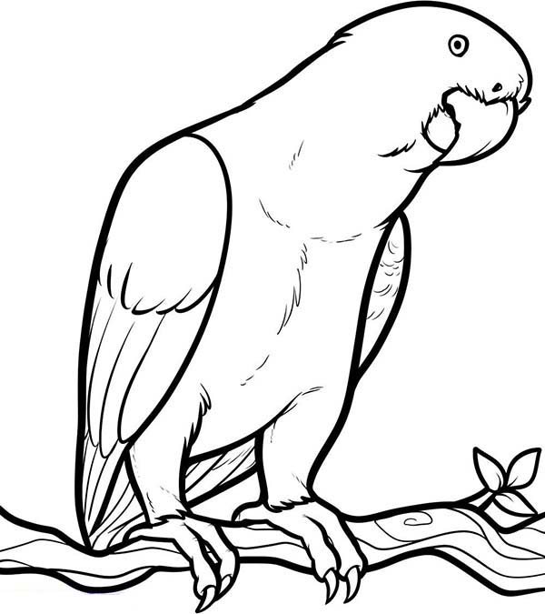 This below coloring picture clipart panda free clipart for Coloring pages parrot