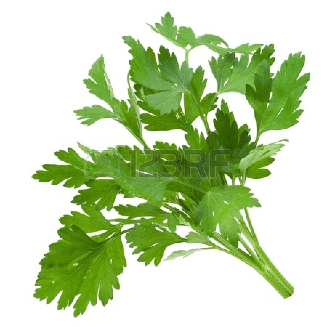 Parsley 20clipart Clipart Panda Free Clipart Images