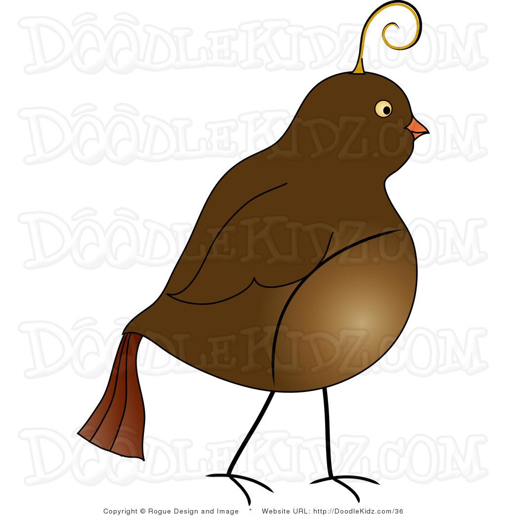 clipart of quail - photo #44