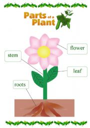 Parts Of A Plant For Kids Clipart Panda Free Clipart Images