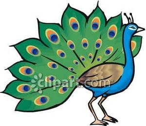 peacock clipart clipart panda free clipart images rh clipartpanda com peacock clipart free peacock clipart free