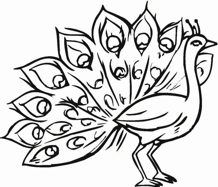 Peacock Coloring Pages | Clipart Panda - Free Clipart Images