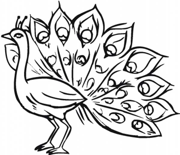 Free Coloring Pages Of Peacock For Drawing