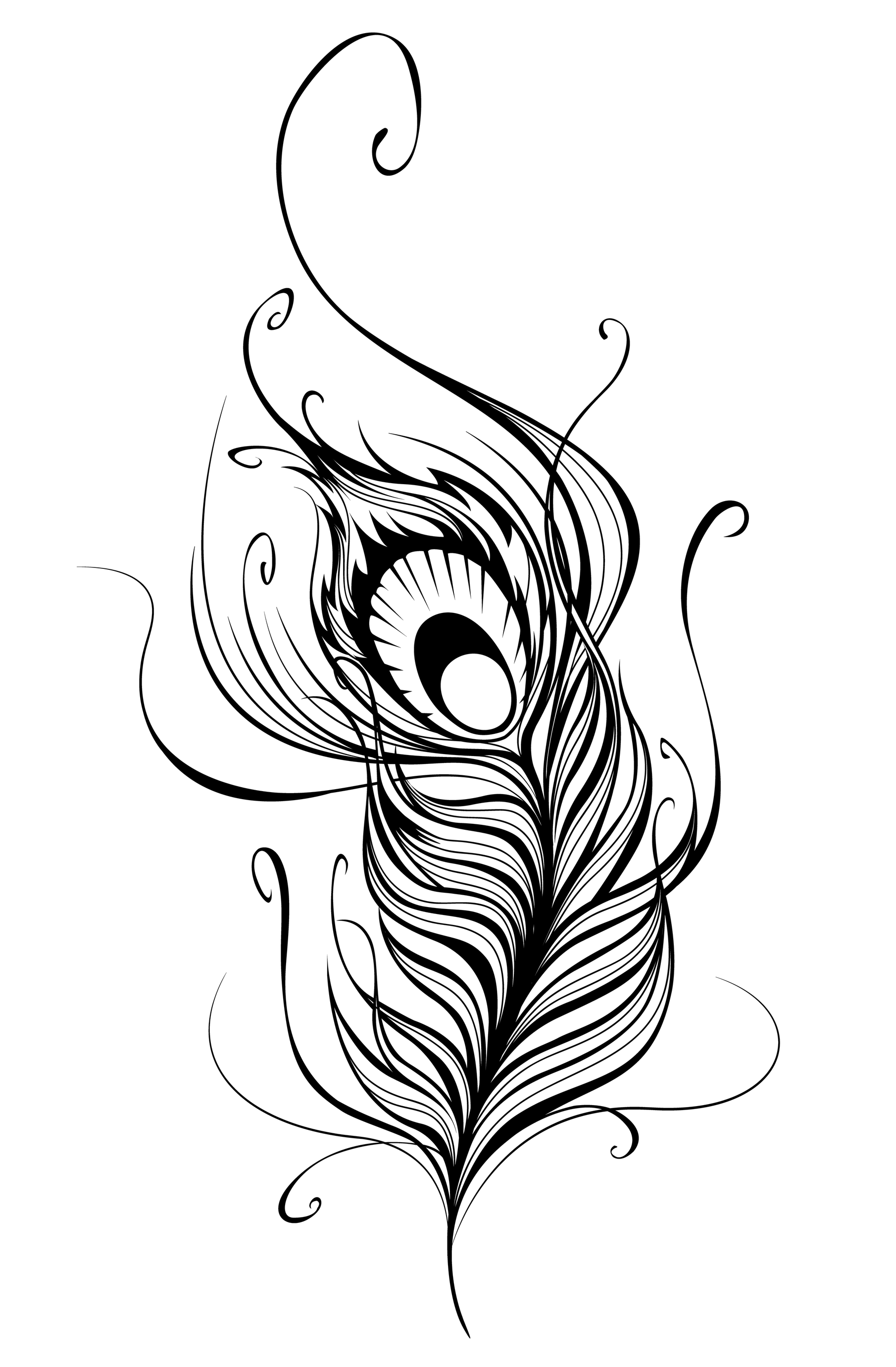 Line Drawing Of Peacock : Peacock feather border designs clipart panda free