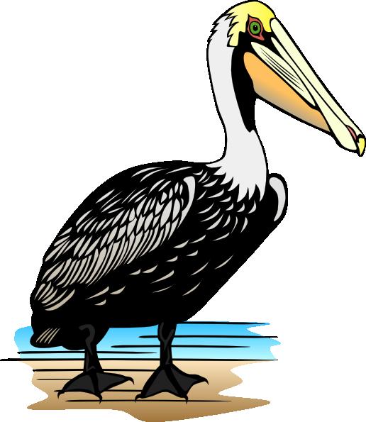 0 pelican clipart | Clipart Fans | Pelican, Clip art, Pelican bay