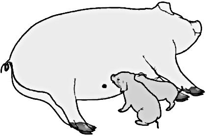 Pig Pen Clipart | Clipart Panda - Free Clipart Images