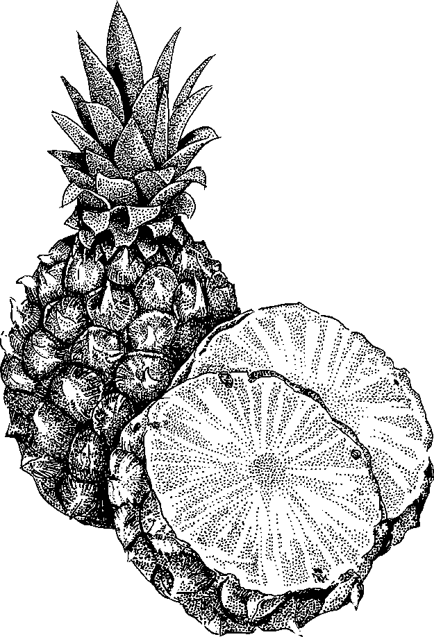 Pineapple Clipart Black And White | Clipart Panda - Free ...