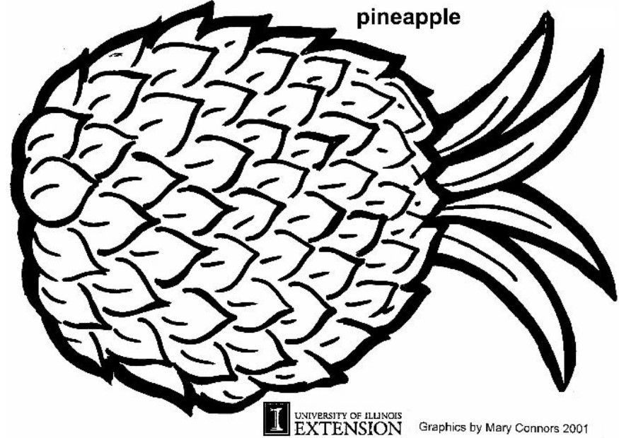 pineapple coloring page clipart panda free clipart images