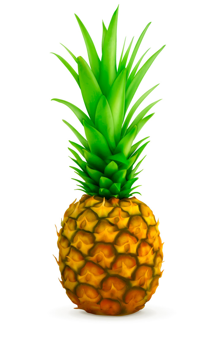 Image Gallery pineapple vector