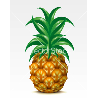 Pineapple Vector Free Download | Clipart Panda - Free Clipart Images