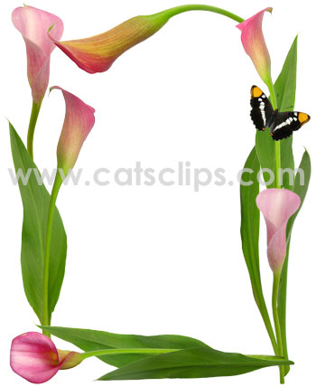 Pink Calla Lily Butterfly Clipart Panda Free Clipart Images