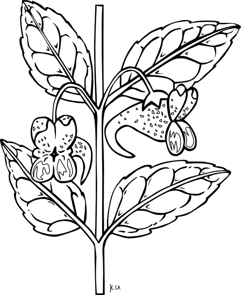 House Plant Clipart Black And White | Clipart Panda - Free ...