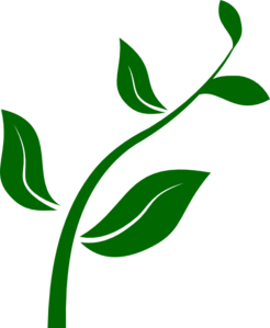 Image result for plant clipart