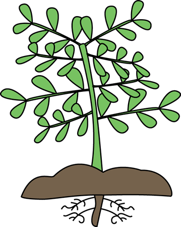 plant with roots clip art clipart panda free clipart images rh clipartpanda com plant clip art with roots plant clipart black and white