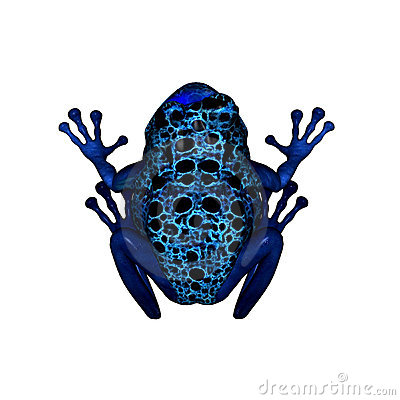 Poison dart frog clip art - photo#25