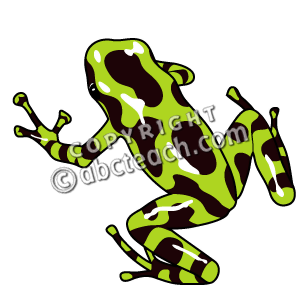 Poison dart frog clip art - photo#4