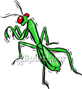 praying mantis clip art clipart panda free clipart images rh clipartpanda com free praying mantis clipart cute praying mantis clipart