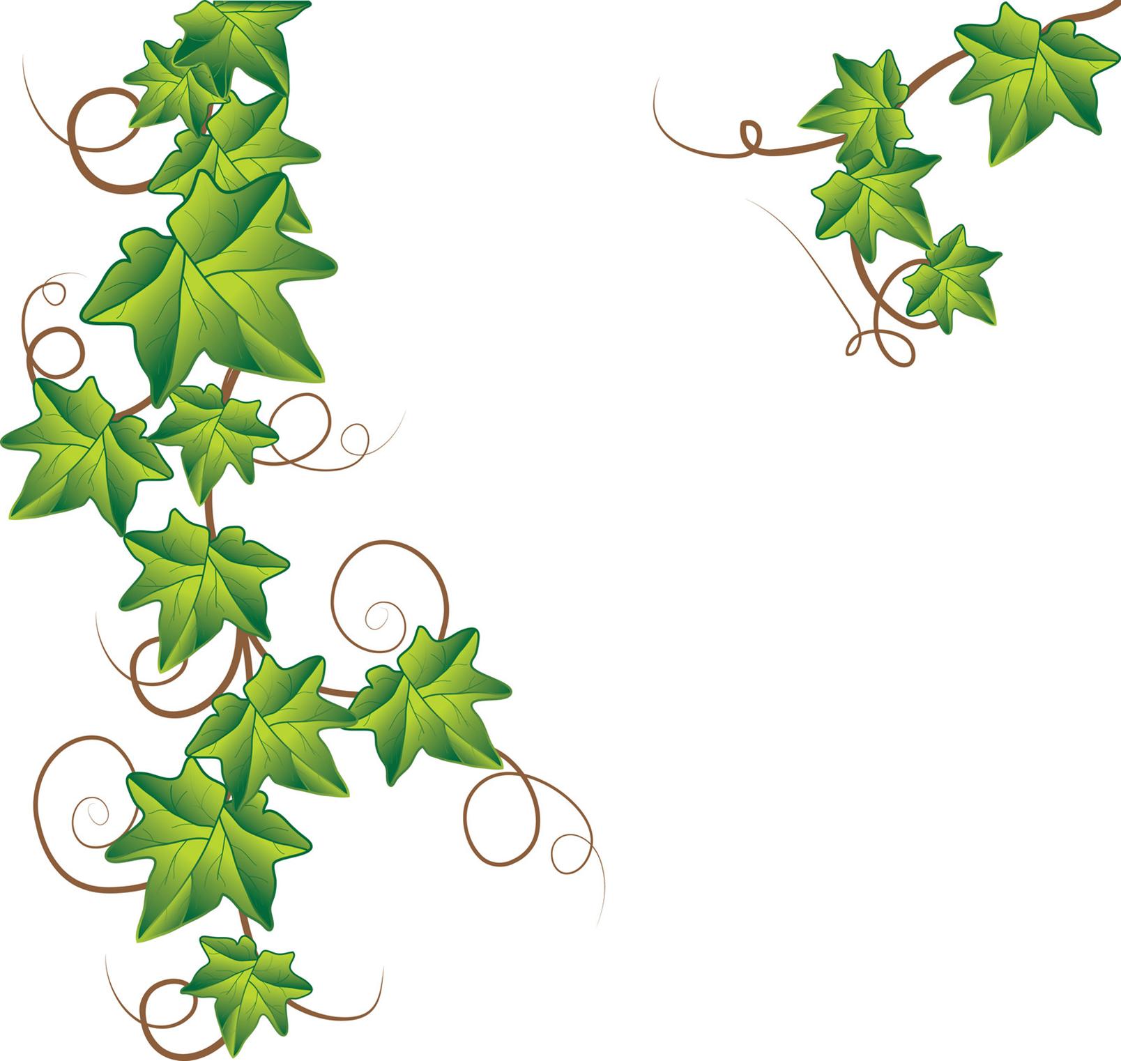 Clip Art Vine Clipart pumpkin vine clipart panda free images