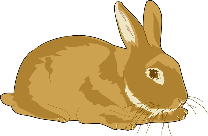 Clip Art Rabbit Clipart rabbit clipart panda free images