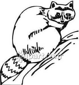 Raccoon Clip Art